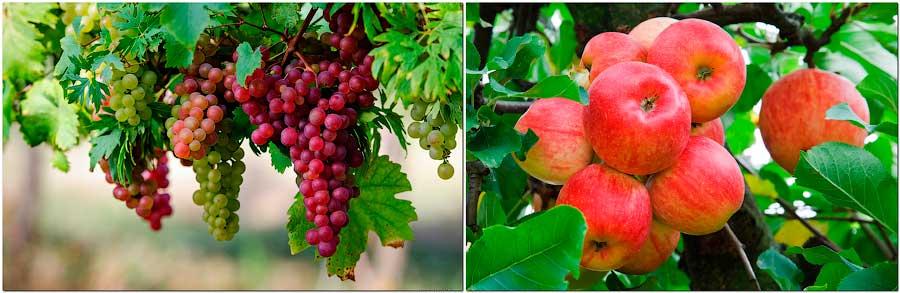 виноград, яблоко
