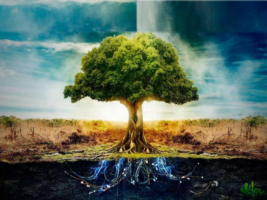 Строение Родового дерева