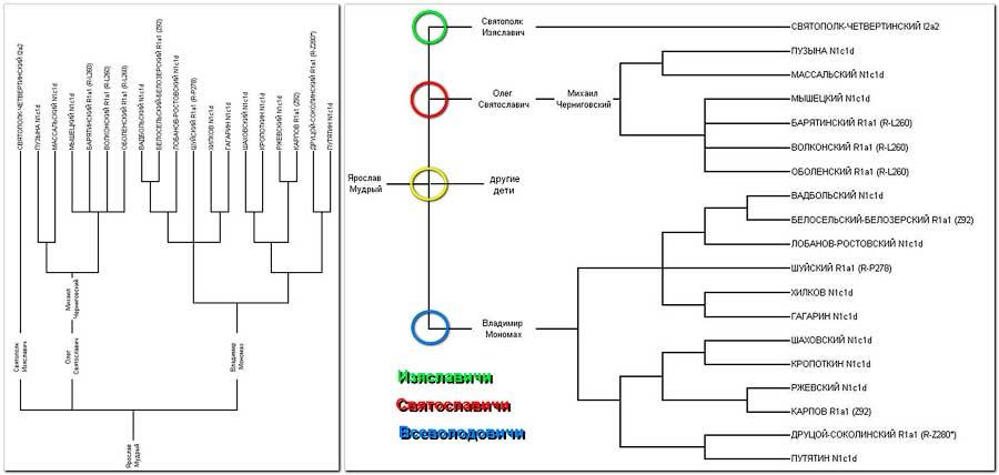 ДНК Родовое дерево